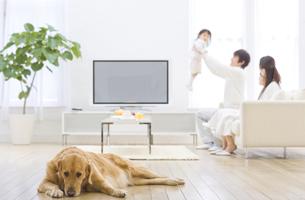 伏せている犬と家族の写真素材 [FYI01318111]