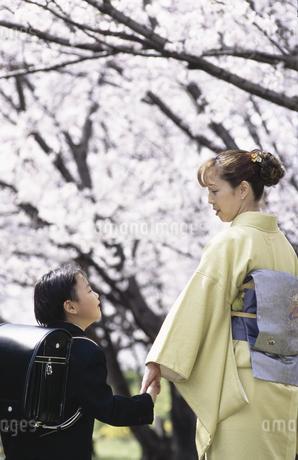 桜と親子の写真素材 [FYI01321511]