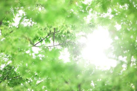 木漏れ日イメージの写真素材 [FYI01321567]