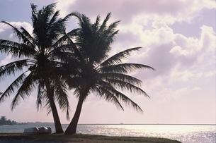 ヤシの木 空 海の写真素材 [FYI01321760]