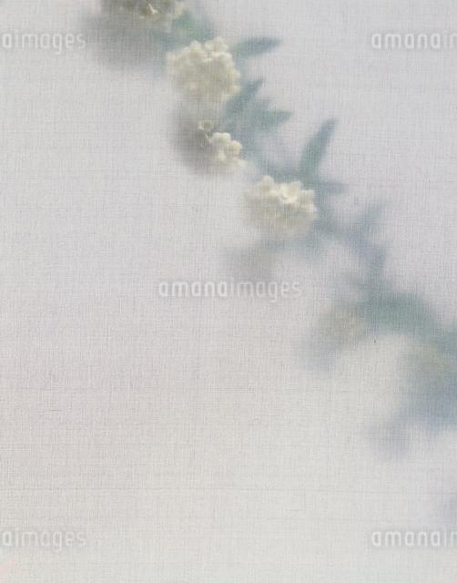 花1輪の写真素材 [FYI01321780]