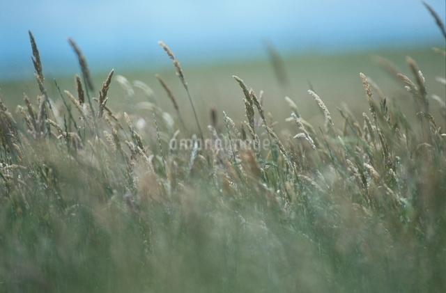 植物の写真素材 [FYI01321836]