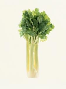 野菜の写真素材 [FYI01322024]