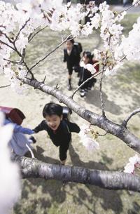 桜と小学生の写真素材 [FYI01322333]