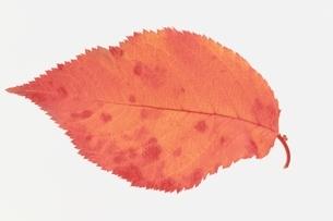 葉の写真素材 [FYI01322382]