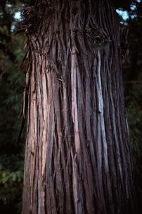 花・植物 木 大木 アップの写真素材 [FYI01322871]