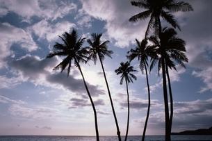 ヤシの木 空 海の写真素材 [FYI01323214]