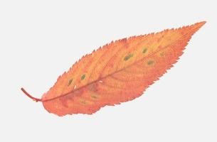葉の写真素材 [FYI01323306]