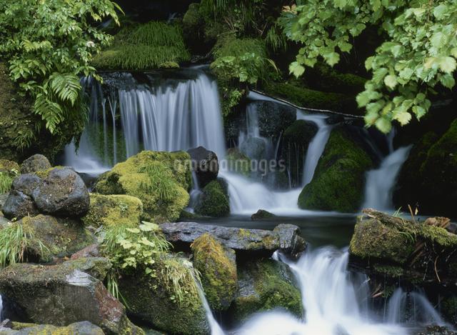 白川源流の写真素材 [FYI01323693]