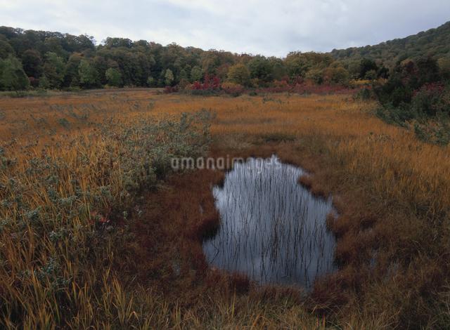 秋の大沼湿原の写真素材 [FYI01324020]