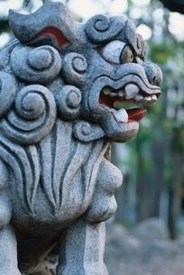 ライフスタイル・行事 狛犬 お参りの写真素材 [FYI01324292]