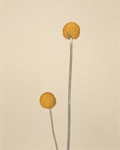 花のイラスト素材 [FYI01324378]