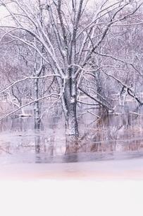 冬の木の写真素材 [FYI01324687]