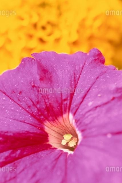 花のイメージの写真素材 [FYI01324729]