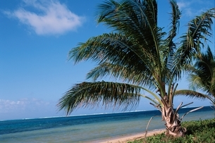 ヤシの木 空 海の写真素材 [FYI01325144]
