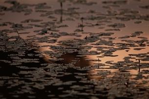 水面の写真素材 [FYI01325148]
