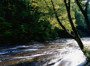 新緑と川の写真素材 [FYI01325319]
