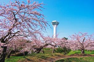 五稜郭公園の五稜郭タワーと桜の写真素材 [FYI01326888]