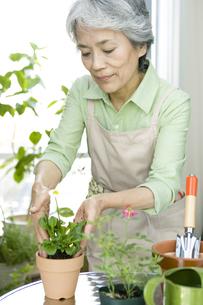 苗木を植えるシニア女性の写真素材 [FYI01326958]