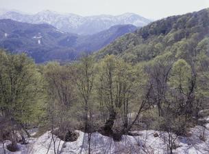 新緑の森と山の写真素材 [FYI01328299]