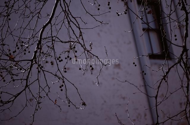 木の写真素材 [FYI01328654]