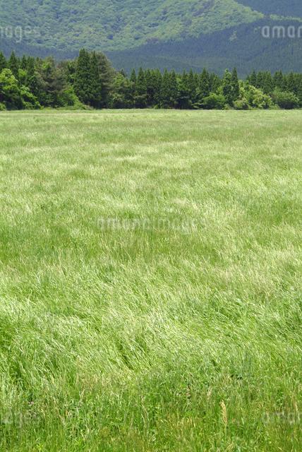 草原の写真素材 [FYI01330136]