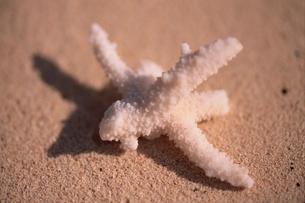 珊瑚の写真素材 [FYI01331254]