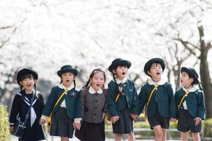 桜並木と6人の幼稚園児の写真素材 [FYI01331334]