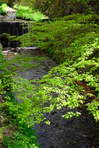 川と新緑の写真素材 [FYI01331477]