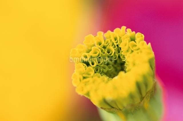 花のイメージの写真素材 [FYI01331931]