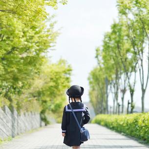 新緑の歩道を歩く幼稚園児の後姿の写真素材 [FYI01331969]