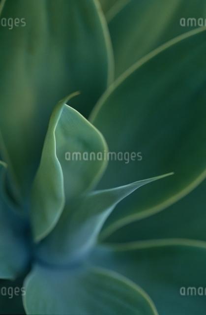 葉の写真素材 [FYI01333280]
