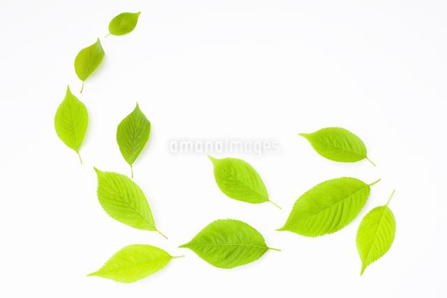 葉っぱの写真素材 [FYI01333761]