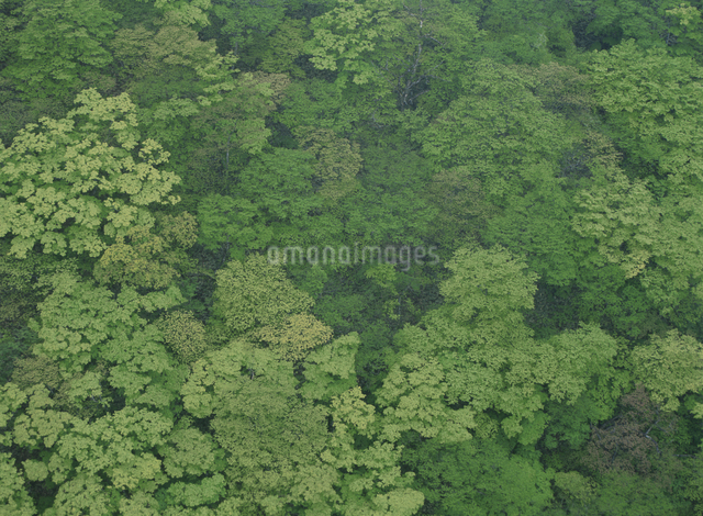 新緑の写真素材 [FYI01333818]