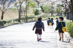 歩道を歩く幼稚園児の後姿の写真素材 [FYI01334446]