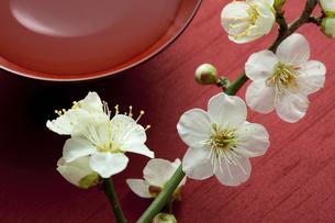 梅の花と杯の写真素材 [FYI01334608]