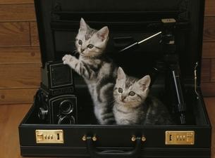 アタッシュケースの中の子猫2匹の写真素材 [FYI01334665]