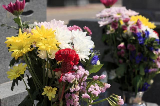 お彼岸の花の写真素材 [FYI01334848]