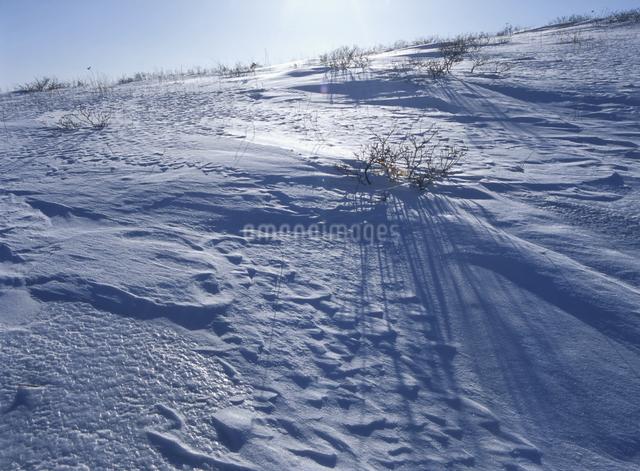冬の霧ヶ峰の写真素材 [FYI01335763]