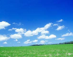草原と青空の写真素材 [FYI01335809]