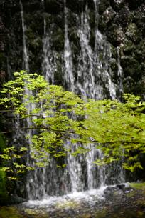 滝と新緑の写真素材 [FYI01336200]