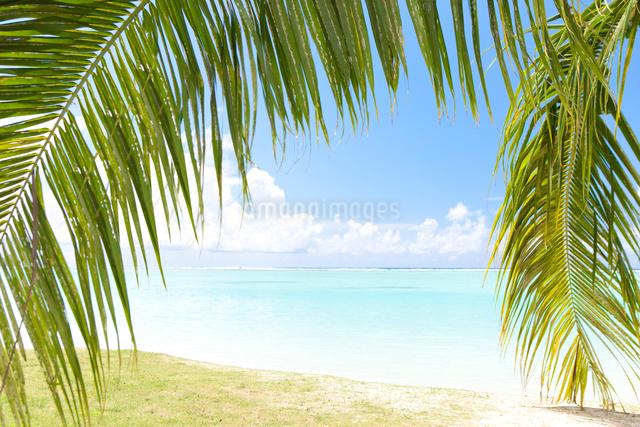 ヤシの葉越しに見える海の写真素材 [FYI01336307]