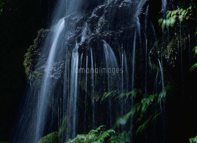 湧水の写真素材 [FYI01336486]