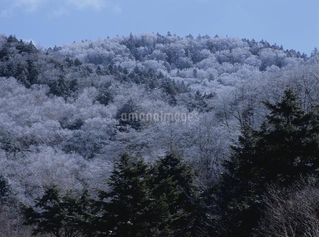 霧氷の山の写真素材 [FYI01336681]