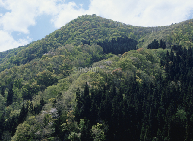 新緑の山と青空の写真素材 [FYI01337598]