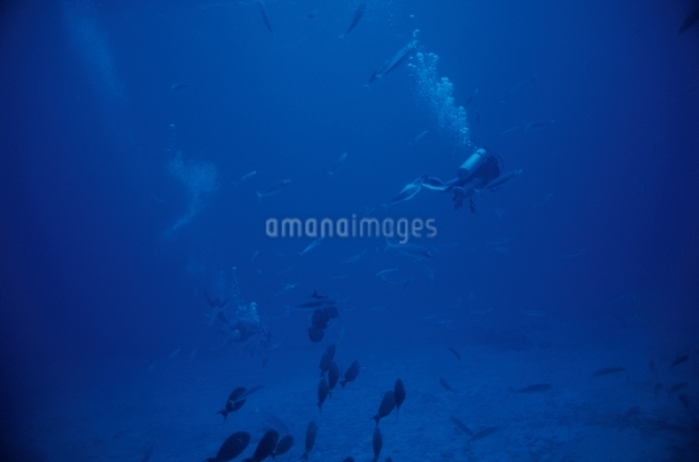 U.S.A. オアフ島の写真素材 [FYI01338019]