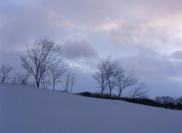 冬の雪原の写真素材 [FYI01338029]