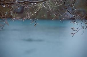 花・植物 葉の写真素材 [FYI01338230]