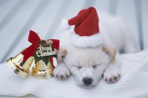 帽子を被った子犬とクリスマスイメージの写真素材 [FYI01338270]