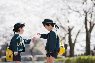 桜並木で遊ぶ2人の幼稚園児の写真素材 [FYI01338286]